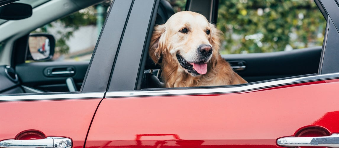 ways to remove pet hair from car