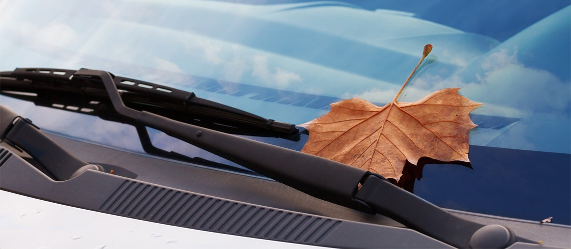 get rid of bird poop stains on your car