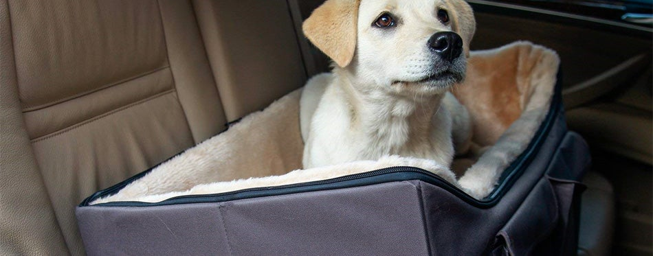 labrador in a dog car seat