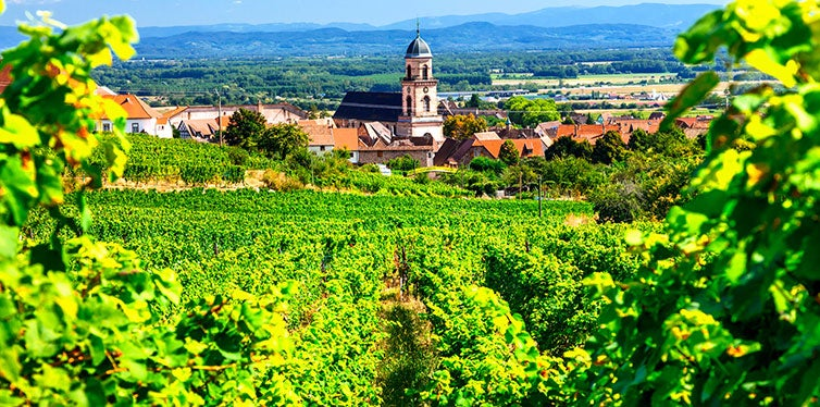 Alsace's Vineyard Route