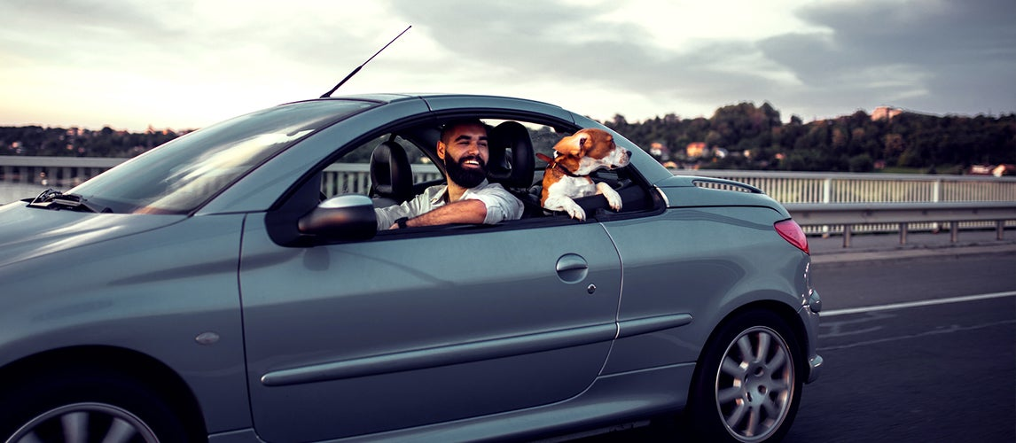 the best cars for dog owners to buy