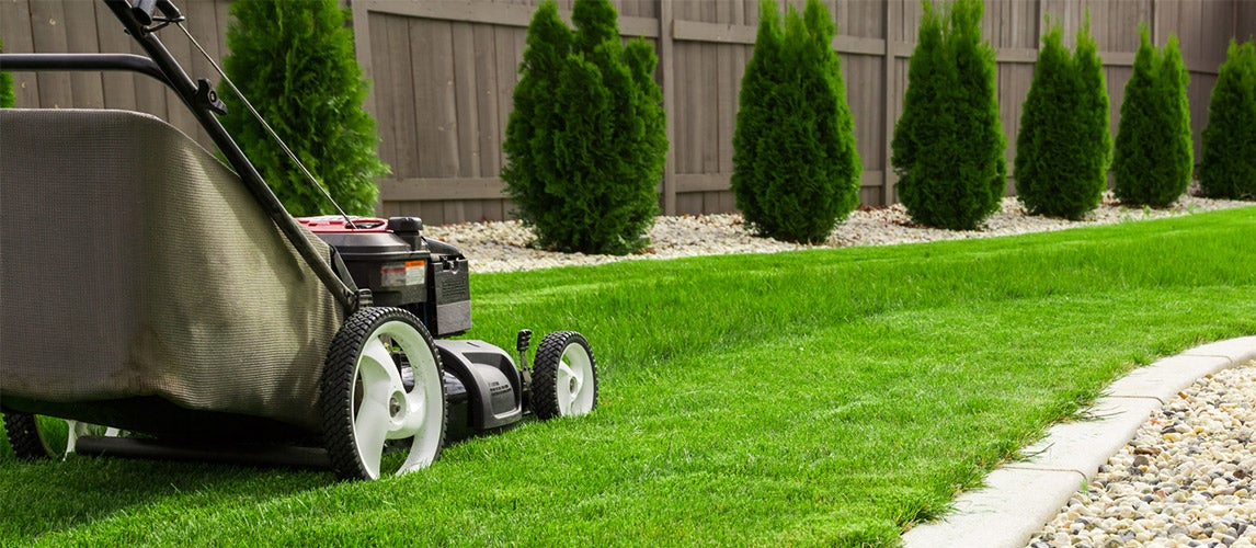Lawn Mower with Cover