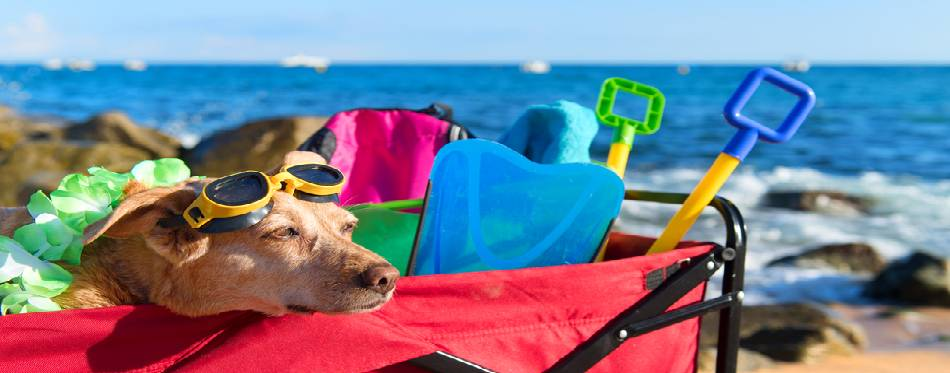Red beach cart with luggage and funny dog