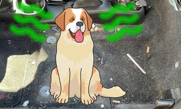 Why Can't I Get This Damn Dog Smell Out Of My Car?