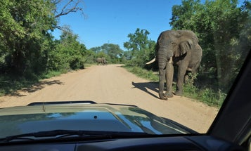 That Time I Almost Got a Land Cruiser Thrashed by an Elephant in Africa